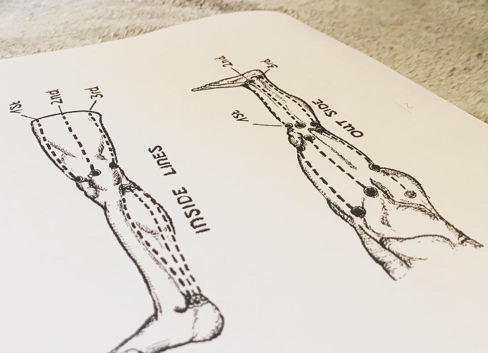 Kanały energetyczne w nogach